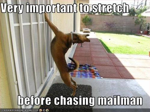 chase,german shepherd,important,mailman,stretch