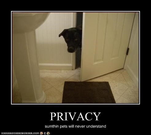 bathroom human labrador privacy toilet - 2678429440