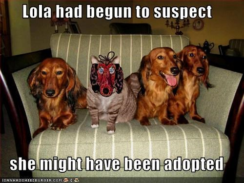 adopted,costume,dachshund,lolcats,mask