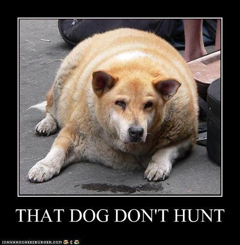 Image result for that dog don't hunt
