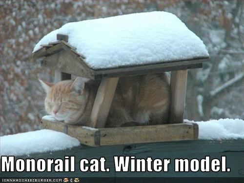 birdhouse,monorail cat,snow
