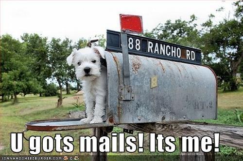mail mailbox maltese - 2682700544