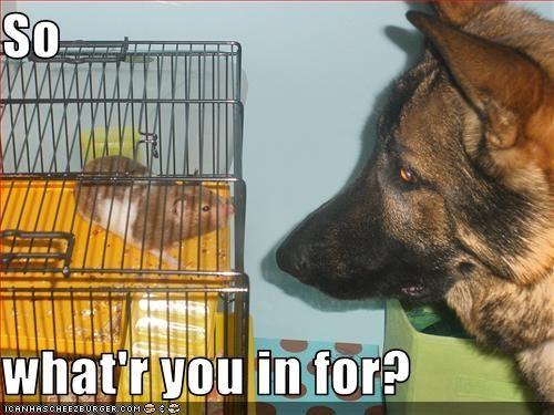cage german shepherd jail - 2684357120