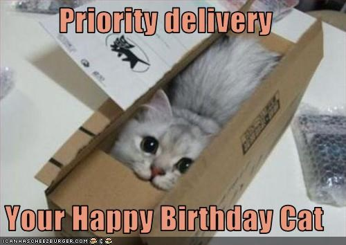 grey cat sitting inside small cardboard box looking up happy birthday meme