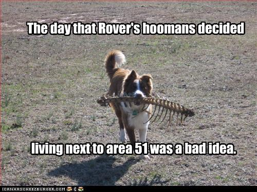 The day that Rover's hoomans decided living next to area 51 was a bad idea.