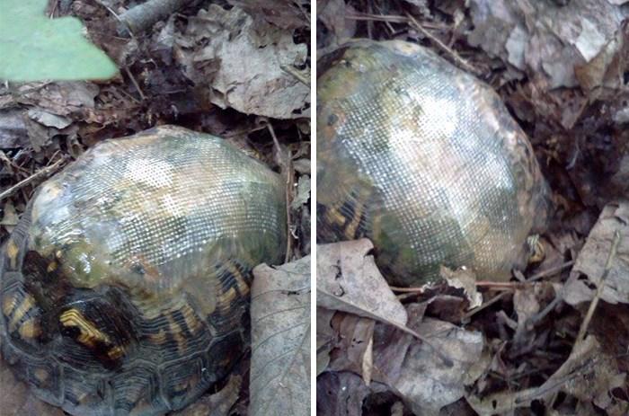 fibra de vidrio tortuga
