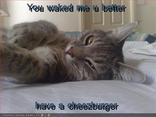 Cheezburger Image 2687862016