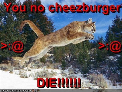 Cheezburger Image 2687872256