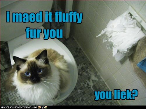 bad cat bathroom destruction helping toilet paper w00t - 2688045312