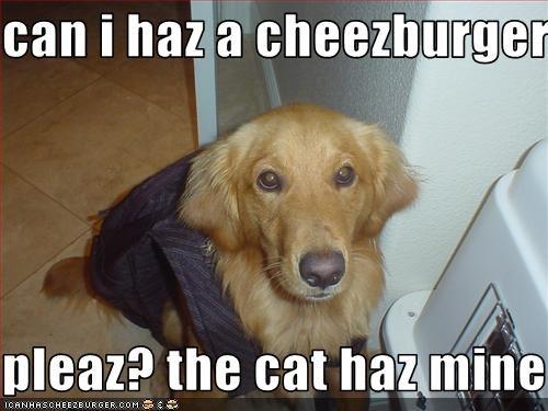 Cheezburger Image 2689446400