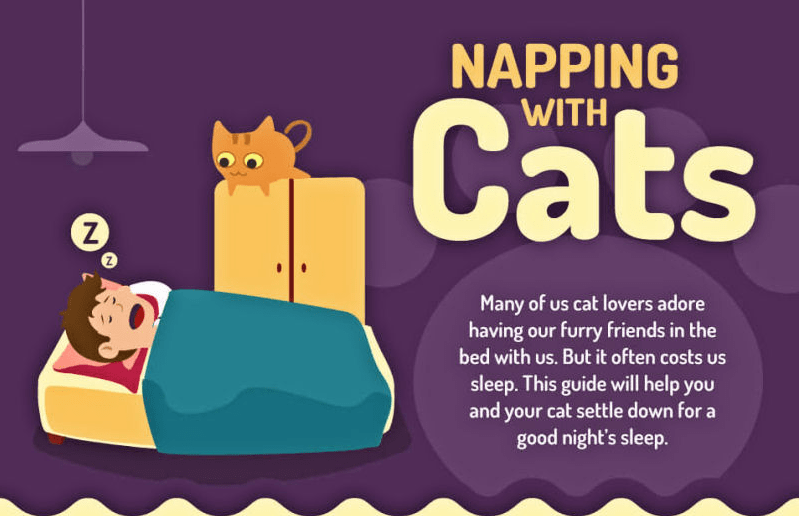 Tips on cat's sleeping habits