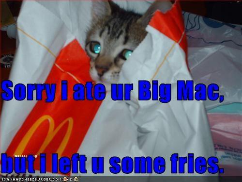 Cheezburger Image 2690286848