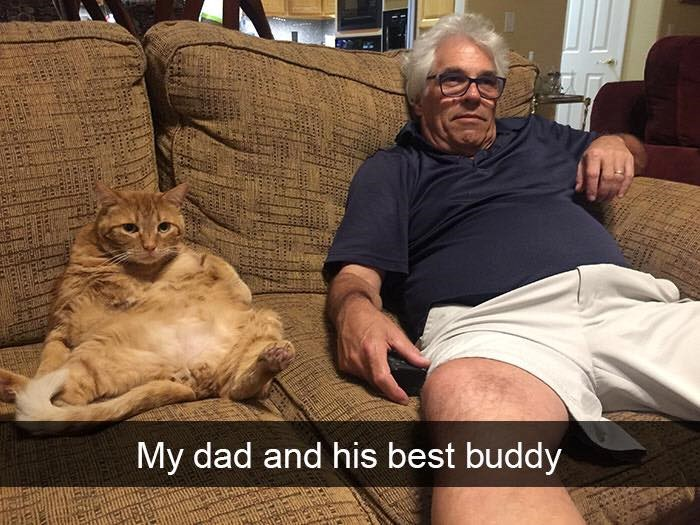 cats Snapchats that will make you lough out loud
