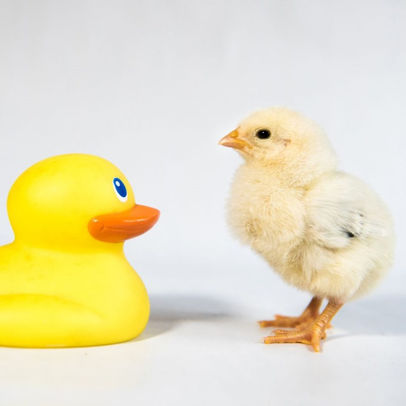 photos of cute chicks posing with kids toys