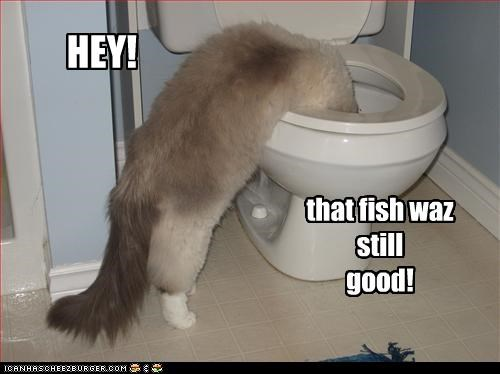 fish,toilet,want