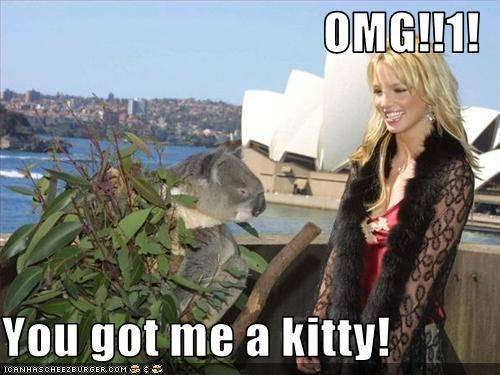 singers,australia,britney spears,kitty,koala,stupid