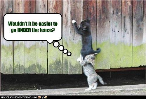 climbing cute fence kitten - 2692711680
