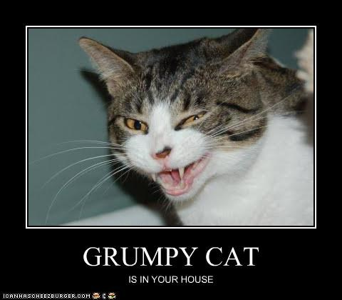 GRUMPY CAT IS IN YOUR HOUSE