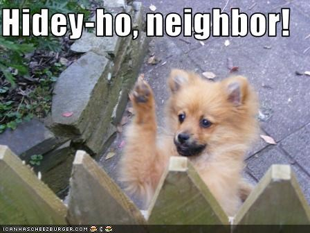 fence hello neighbors pomeranian puppy wave