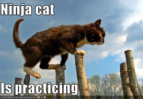 cute kitten ninja practicing - 2693533440