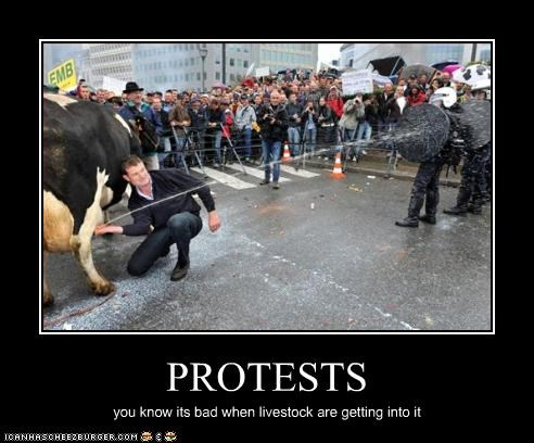 PROTESTS you know its bad when livestock are getting into it