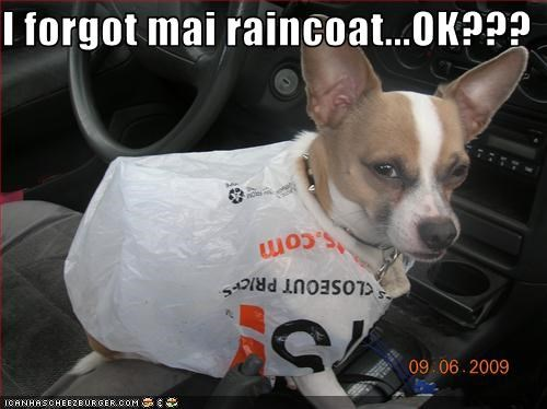 cars,chihuahua,costume,plastic bag,rain,raincoat