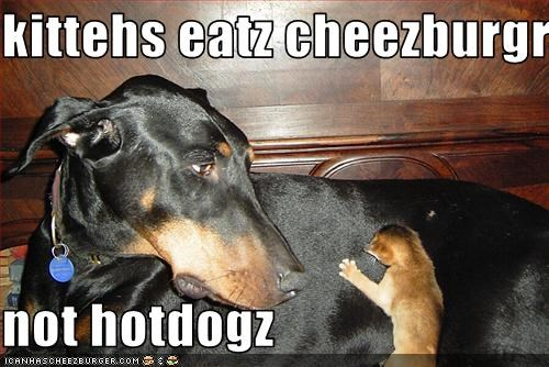 Cheezburger Image 2694230272