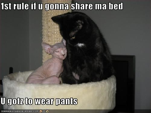 bed,do not want,hairless,pants,sharing