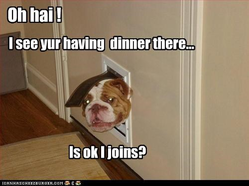 bulldog,dinner,doggie door,food,head,join