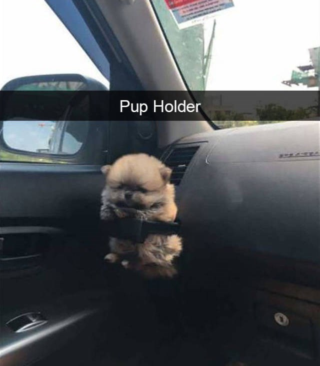 An adorable little fluffy puppy that is riding in the car in the cup compartment that their owner now calls the puppy holder- cover for a list of funny memes