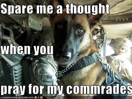 commrades german shepherd prayer soldiers