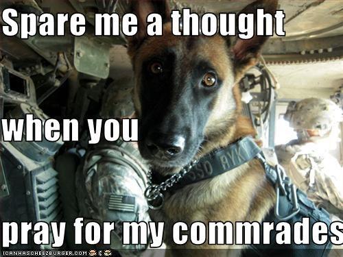 german shepherd prayer soldiers - 2695176192