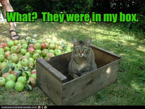 apples,box