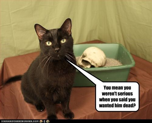 bad cat,litterbox,murder,oops