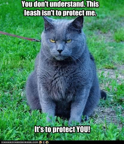 You don't understand. This leash isn't to protect me. It's to protect YOU!
