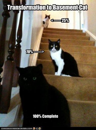 basement cat transformation - 2698676736