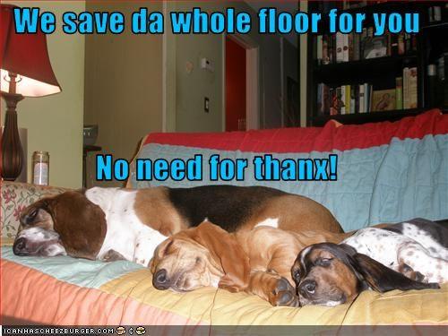 basset hound,couch,floor,save,sitting,sleeping,thanks
