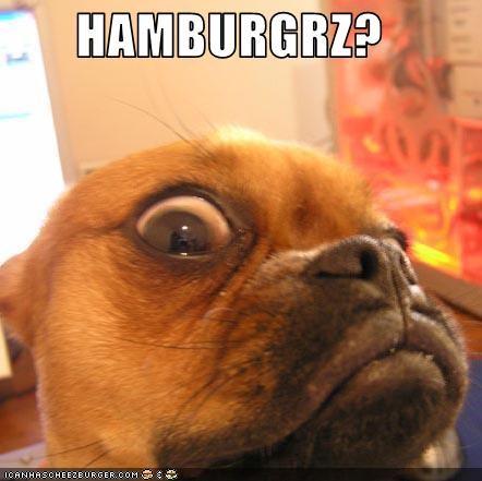 Cheezburger Image 2699426304