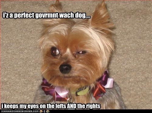 i'z a perfect govrmnt wach dog.... i keeps my eyes on the lefts AND the rights