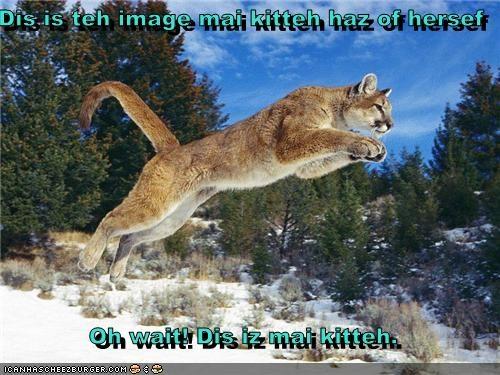 Cheezburger Image 2701347072