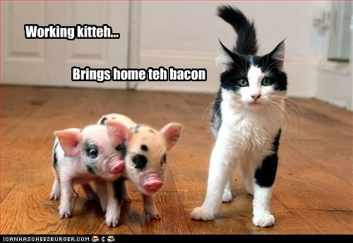 Working kitteh... Brings home teh bacon