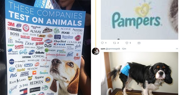 animales test