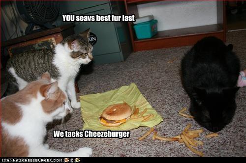 Cheezburger Image 2703774720