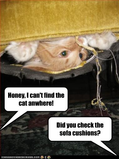 Mabye he will find ur keys and teh remote... Honey, I can't find the cat anwhere! Did you check the sofa cushions?