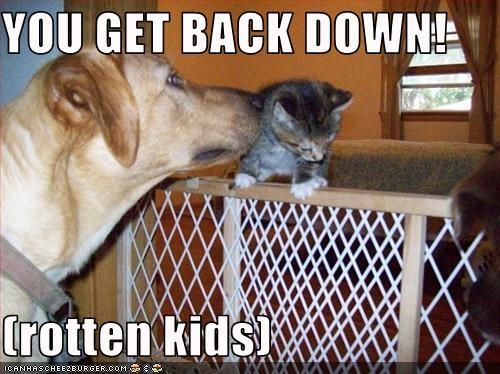 climbing down gate kids kitten labrador lolcats - 2704353280
