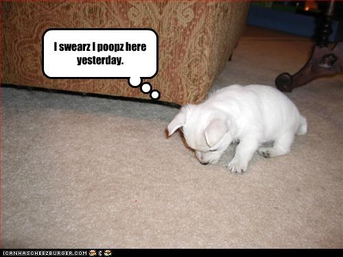 confused,floor,poop,puppy,whatbreed