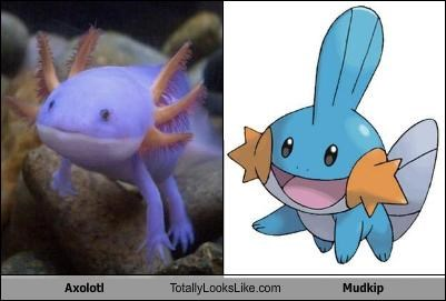 Axolotl Totally Looks Like Mudkip