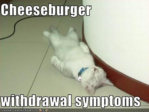 Cheezburger Image 2706418944