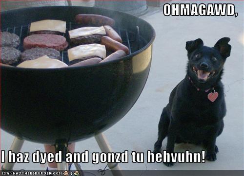 Cheezburger Image 2710372608