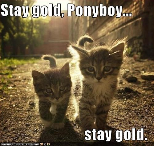 Stay Gold Ponyboy Stay Gold Cheezburger Funny Memes Funny Pictures Nothing to say & saying it: stay gold ponyboy stay gold